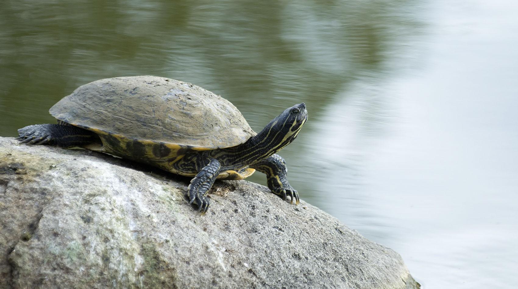 Behandlung von Schildkröten in der Tierarztpraxis Berg am Laim