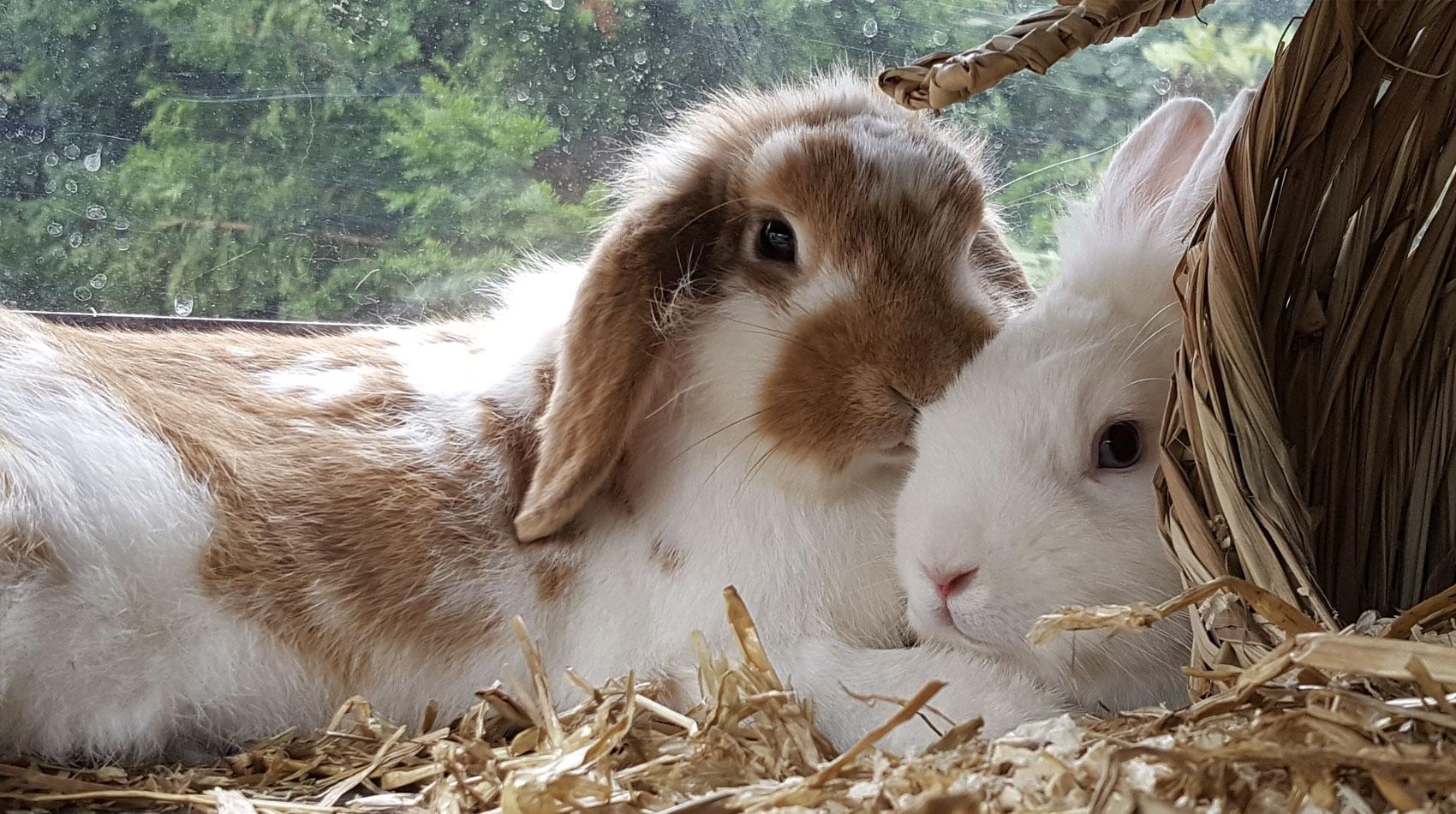 Behandlung von Kaninchen in der Tierarztpraxis Berg am Laim