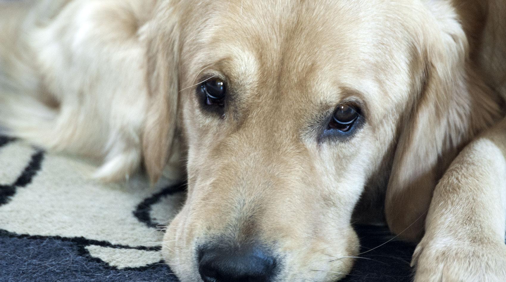 Behandlung von Hunden in der Tierarztpraxis Berg am Laim