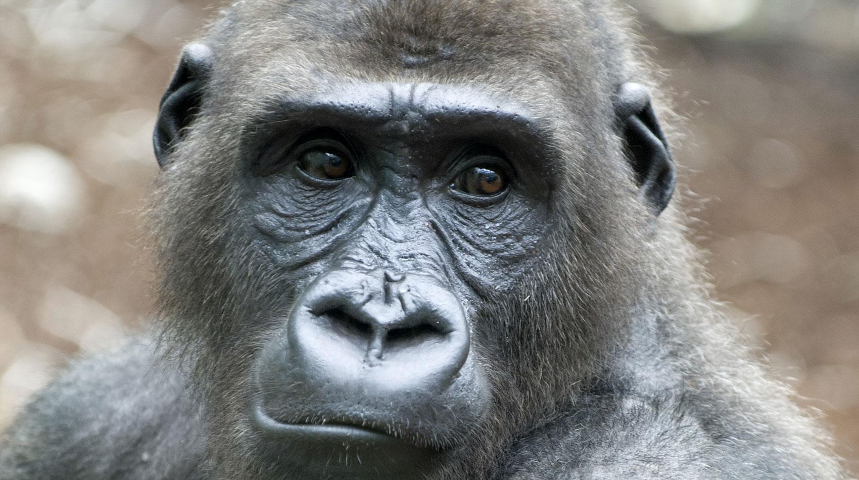 Behandlung von Affen in der Tierarztpraxis Berg am Laim