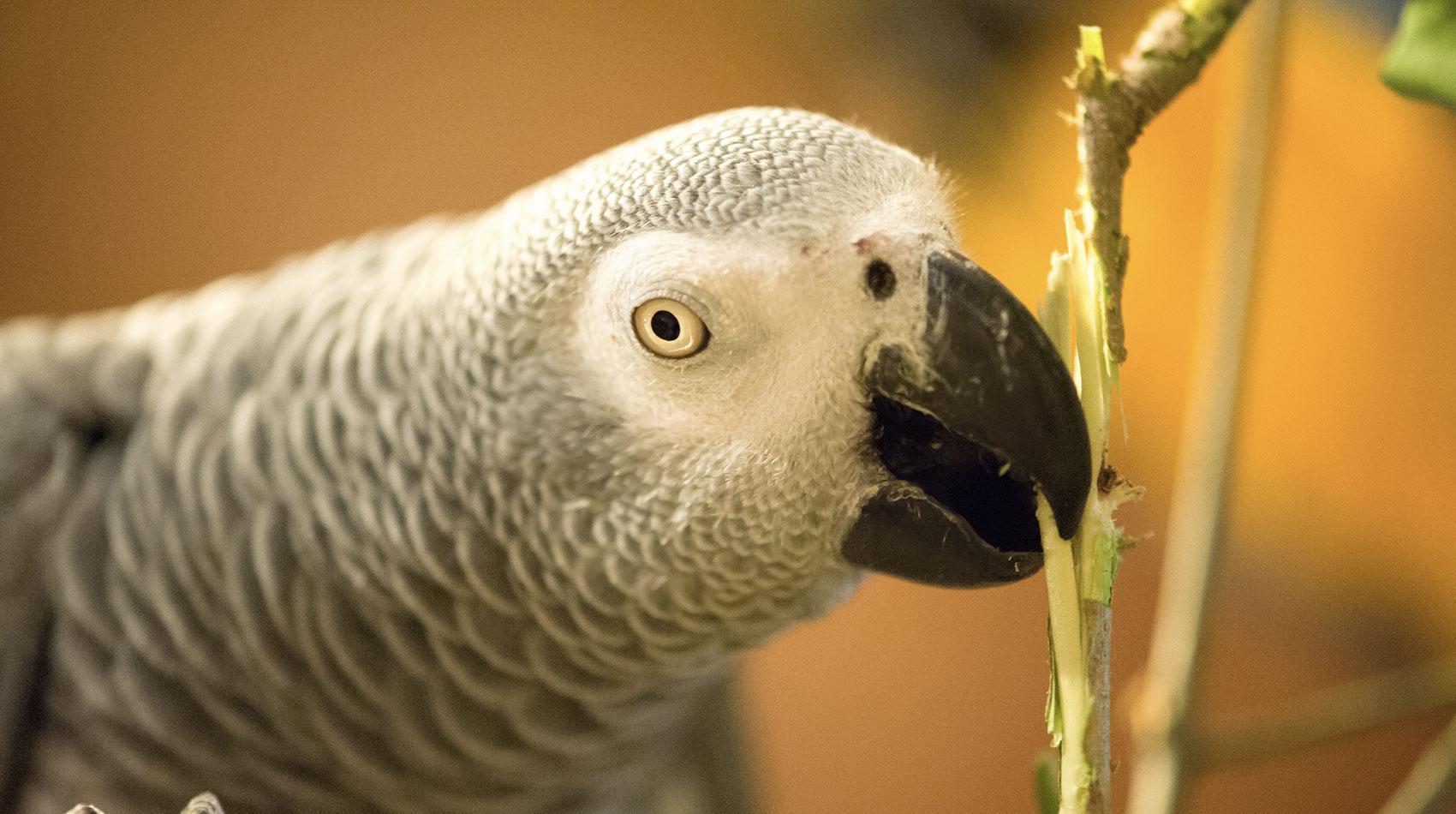 Behandlung von Vögeln in der Tierarztpraxis Berg am Laim