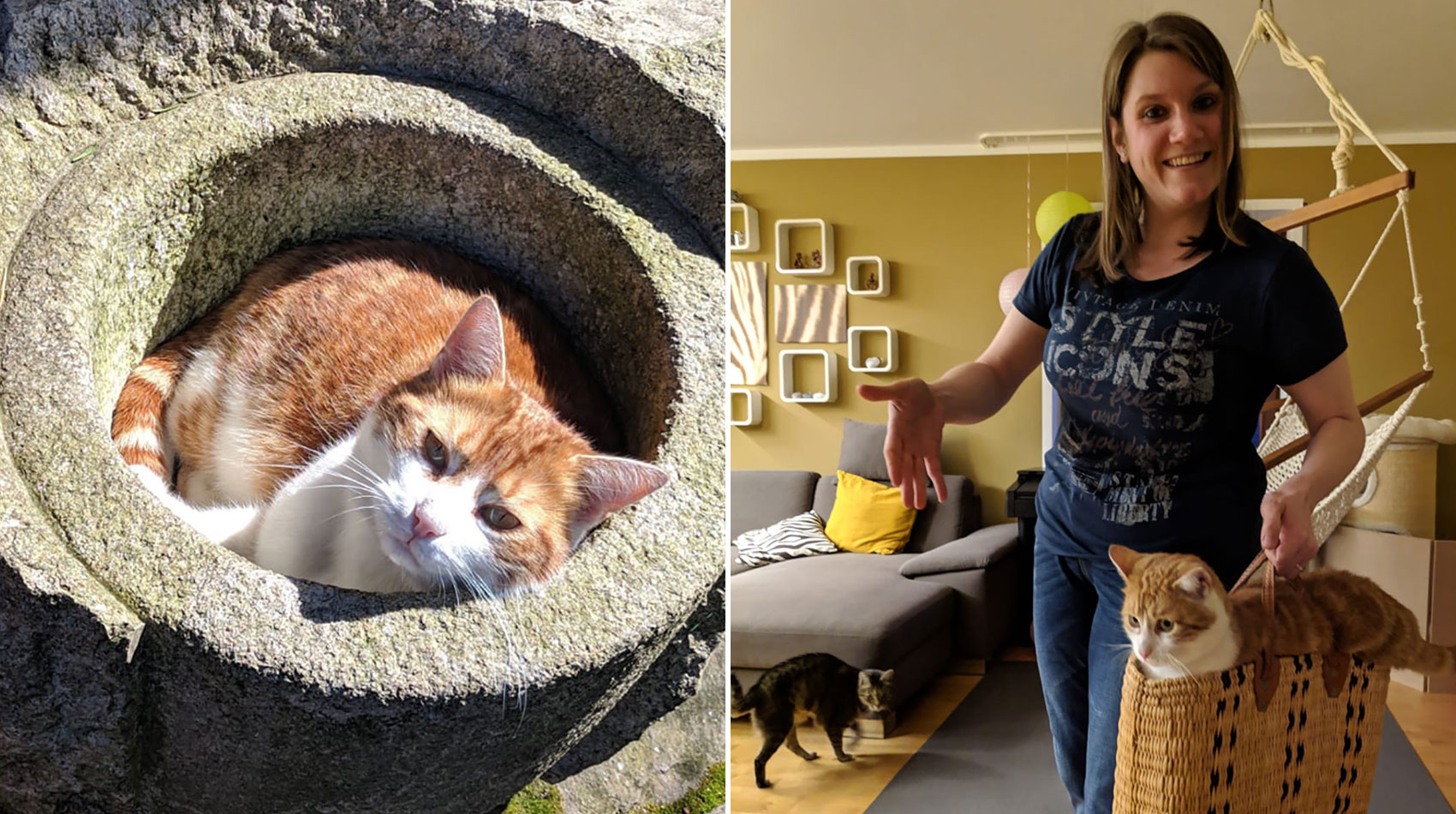 Behandlung von Katzen in der Tierarztpraxis Berg am Laim