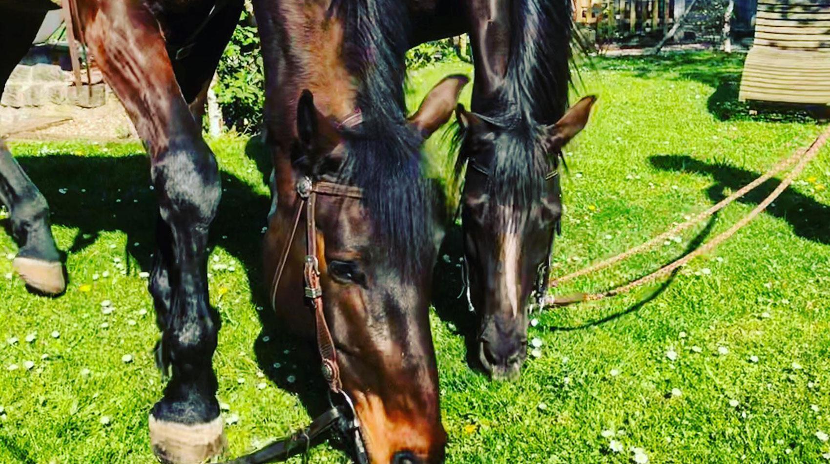 Behandlung von Pferden in der Tierarztpraxis Berg am Laim